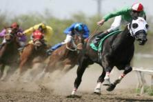How to do progressive staking on horses racing